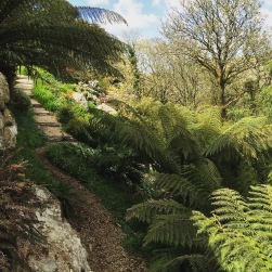 path and ferns